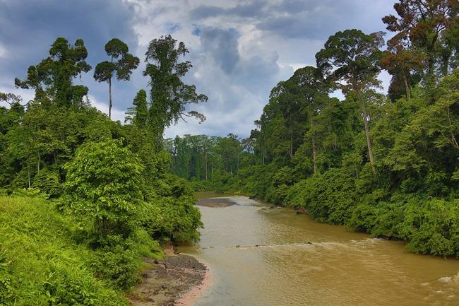 2014 07 06 Borneo_-17