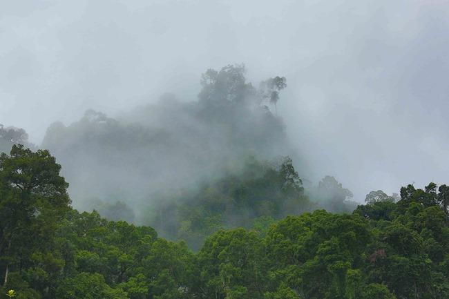 2014 07 06 Borneo_-20