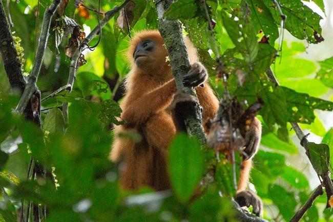 2014 07 06 Borneo_-59