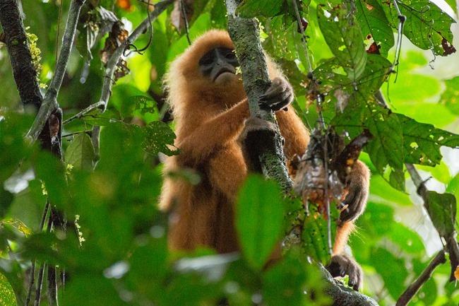 2014 07 06 Borneo_-60