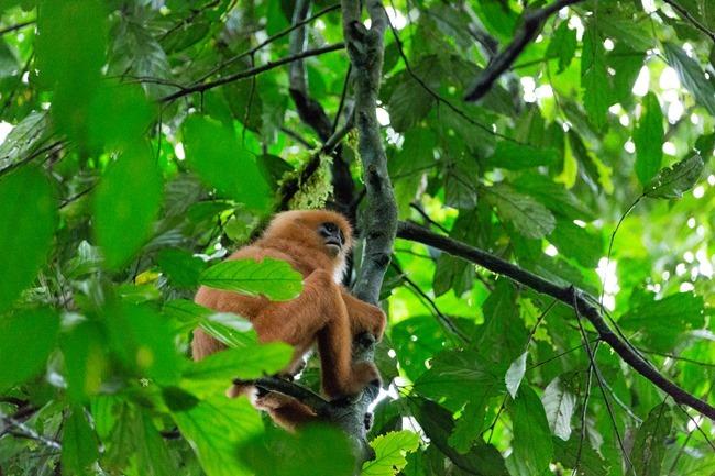 2014 07 06 Borneo_-62