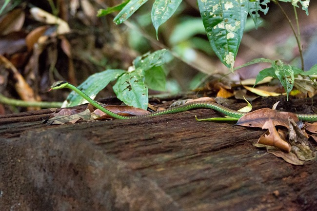 2014 07 07 Borneo _-79