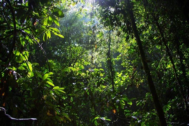 2014 07 07 Borneo_-13