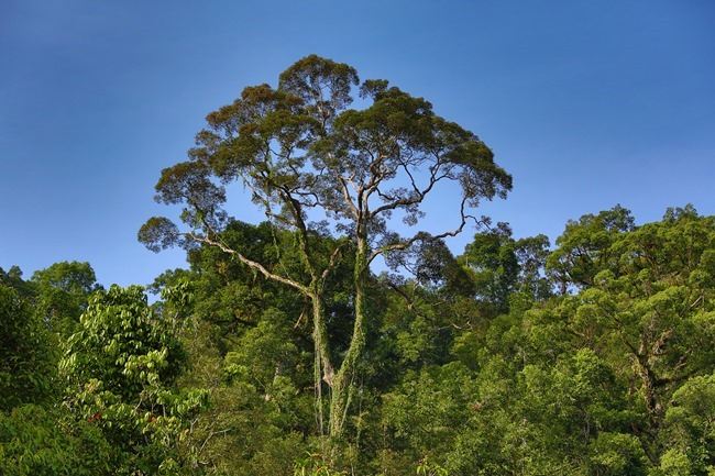 2014 07 07 Borneo_-25