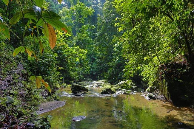 2014 07 07 Borneo_-35-2