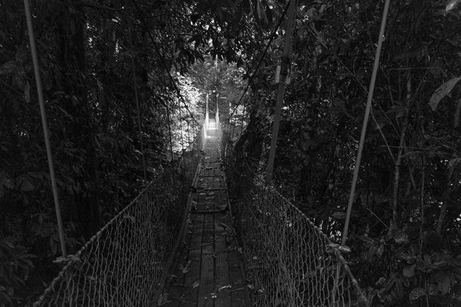 2014 07 07 Borneo_-88