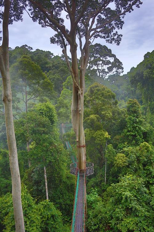 2014 07 08 Borneo_-21
