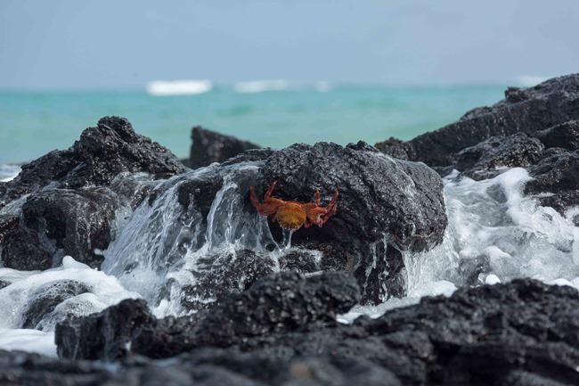 2015 03 12 Isabela beach_-32
