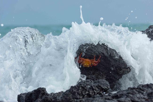 2015 03 12 Isabela beach_-33