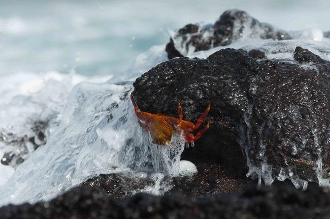 2015 03 12 Isabela beach_-37